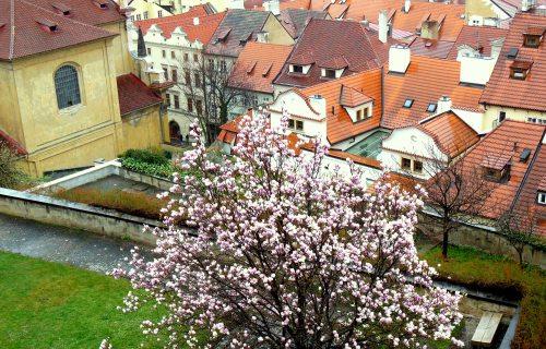 Praga_Hradczany_wiosna