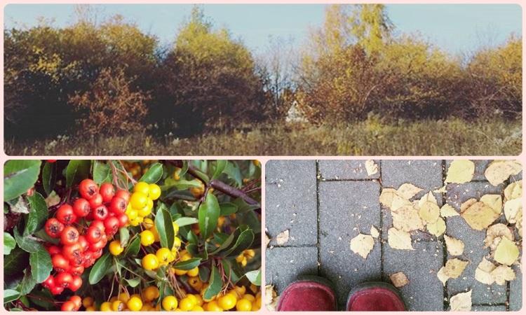 jesień_1_1