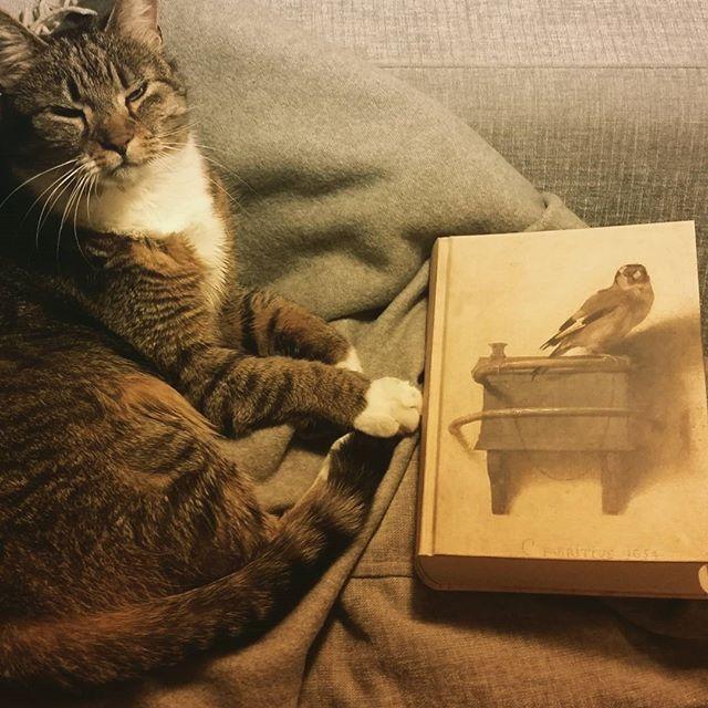 """Najpiękniejszy """"Szczygieł""""! Kot Morris poleca!"""